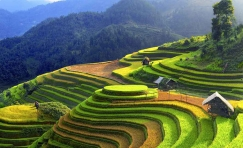 Discover the most beautiful rice terraces 5 Days